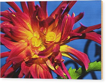 Wood Print featuring the photograph Flower by Kelly Reber