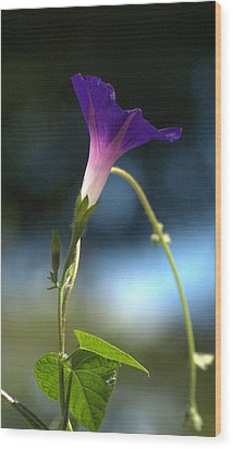 Wood Print featuring the photograph Flower by Michael Dohnalek