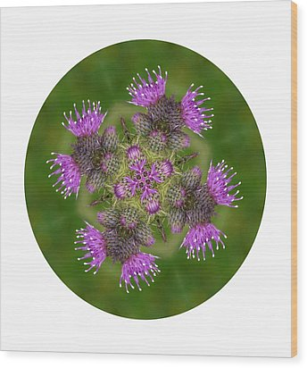 Wood Print featuring the photograph Flower Of Scotland by Lynn Bolt