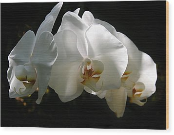 Flower Painting 0004 Wood Print by Metro DC Photography