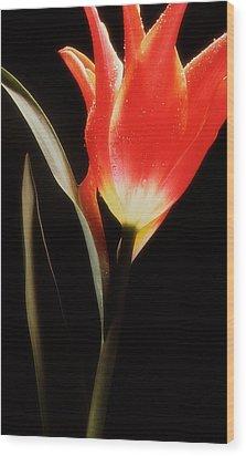 Flower Still 1 Wood Print by Thomas Born