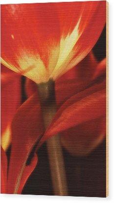 Flower Still 3 Wood Print by Thomas Born