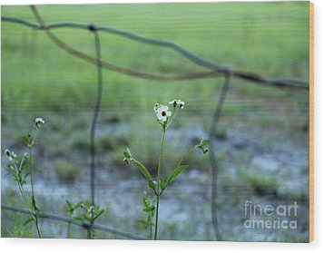 Flower Through The Fence Line Wood Print by Theresa Willingham