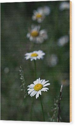 Flower Trail Wood Print by Stephen Thomason