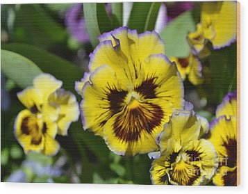 Flower With Pruple Trim Wood Print by Artie Wallace