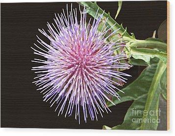 Flowering Artichoke Top View Wood Print by Byron Varvarigos