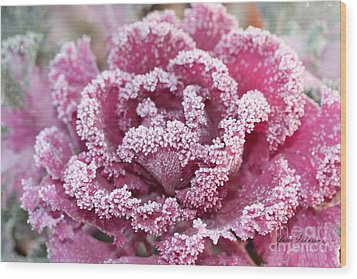 Flowering Cabbage Wood Print by Yumi Johnson