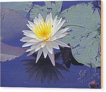 Flowering Lily-pad- St Marks Fl Wood Print