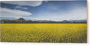 Flowering Mustard Crop In Canterbury Wood Print by Colin Monteath