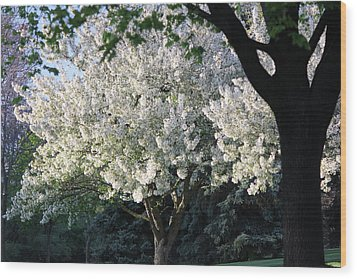 Flowering Springtime Tree Wood Print by James Hammen