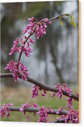 Wood Print featuring the photograph Flowering Tree 1 by Gerald Strine