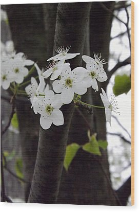 Wood Print featuring the photograph Flowering Tree 4 by Gerald Strine
