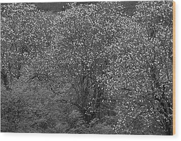 Wood Print featuring the photograph Flowering Trees- St Lucia by Chester Williams