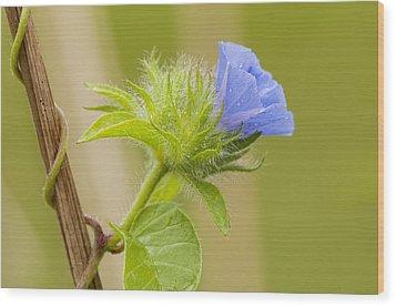 Flowering Wild Vine Wood Print by Bonnie Barry