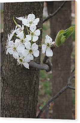 Wood Print featuring the photograph Floweringtree 2 by Gerald Strine