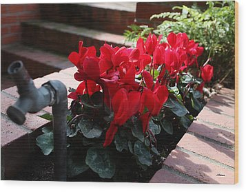 Flowers And Water Spout Wood Print by Luke Robertson