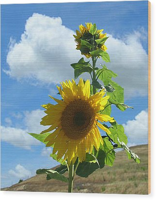Wood Print featuring the photograph Flowers In The Sun by Bonnie Muir