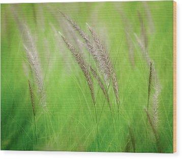 Flowing Reeds Wood Print