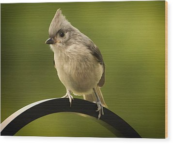 Flowing Tufted Titmouse Wood Print by Bill Tiepelman