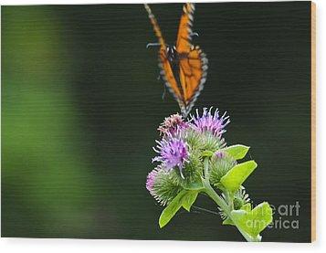 Fluttering Away... Wood Print by Christine Kapler