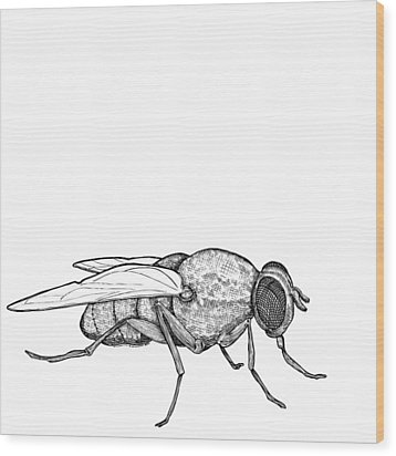 Fly Wood Print by Karl Addison