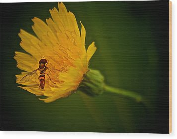 Fly On A Flower Wood Print
