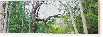 Wood Print featuring the photograph Flying Branch by Pamela Hyde Wilson