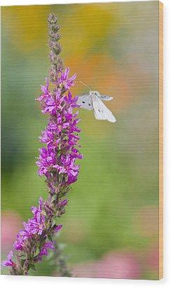 Flying Butterfly Wood Print by Melanie Viola