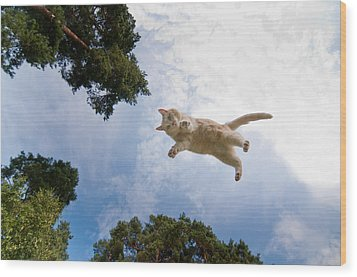 Flying Cat Wood Print by Micael  Carlsson