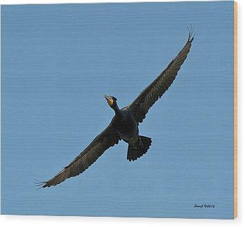 Flying Cormorant Wood Print by Stephen  Johnson