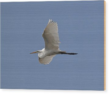 Wood Print featuring the photograph Flying Egret by Jeannette Hunt