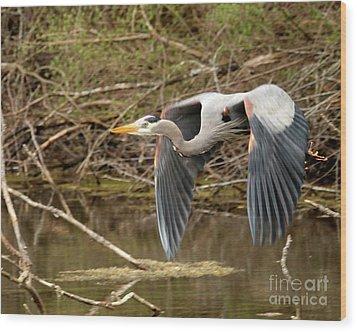 Flying Great Blue Heron Wood Print