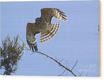 Wood Print featuring the photograph Flying High by Johanne Peale