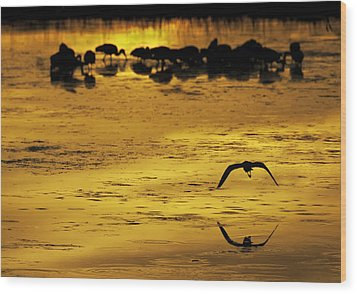 Flying Home - Florida Wetlands Wading Birds Scene Wood Print by Rob Travis