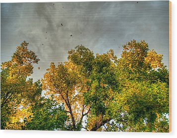 Flying Leaves Wood Print by Stephen  Johnson
