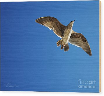 Flying Over Wood Print by Danuta Bennett
