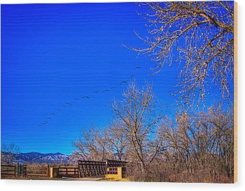 Flying Over South Platte Park Wood Print by David Patterson