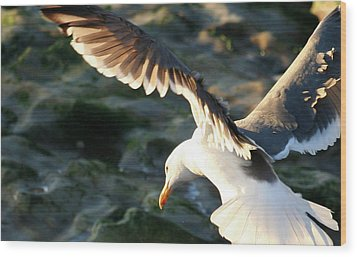 Wood Print featuring the photograph Flying Seagull by Michael Rock