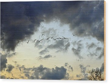Flying South For The Winter Wood Print by Paul Ward