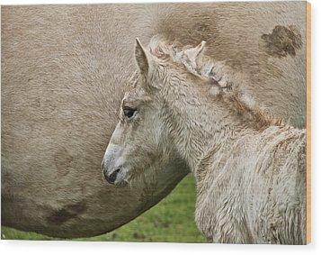 Foal Wood Print by Odd Jeppesen
