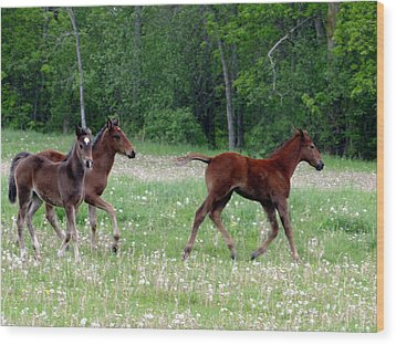 Foals In Dandelions Wood Print
