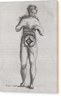 Foetus In Uterus, 17th Century Artwork Wood Print by Middle Temple Library