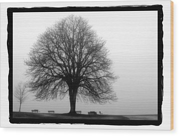 Foggy Day H-5 Wood Print by Mauro Celotti