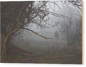 Foggy Horse Wood Print