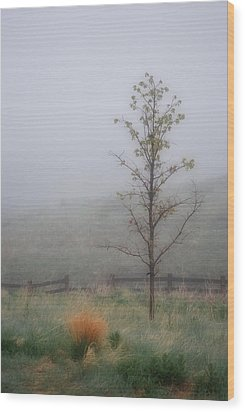 Foggy Morning Wood Print by Amee Cave