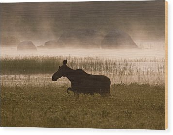 Foggy Stroll Wood Print by Brent L Ander