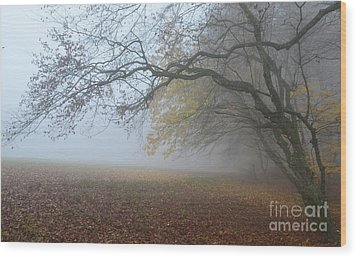 Fogy Forest In The Morning 1 Wood Print by Bruno Santoro