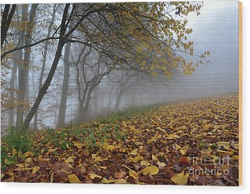 Wood Print featuring the photograph Fogy Forest In The Morning 2 by Bruno Santoro