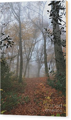 Fogy Forest In The Morning 3 Wood Print by Bruno Santoro