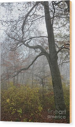 Wood Print featuring the photograph Fogy Forest In The Morning 4 by Bruno Santoro